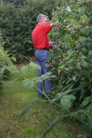 tim picking soft fruit